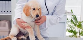 How Can Pet Insurance Help Keep Your Dog or Cat Healthy?