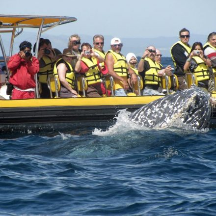 Create Memories to Last a Lifetime by Seeing Whales up Close and Personal