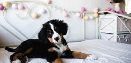 Checklist for Bringing a Puppy Dog Home