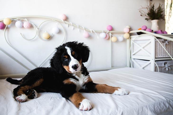 Checklist for Bringing a Puppy Dog Home
